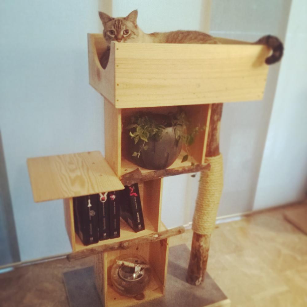L'arbre à chat : indispensable?